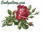 """""""Scarlet Rose"""" (free)"""